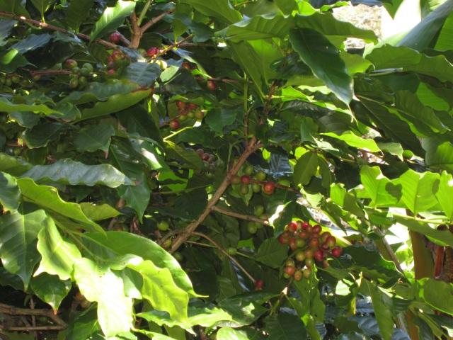 青と赤い実