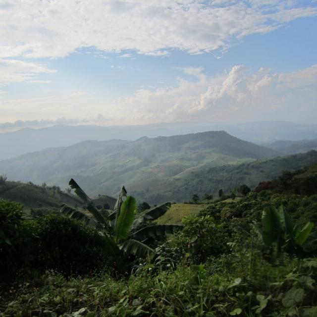 山岳地域 低木、若木-ドイチャン