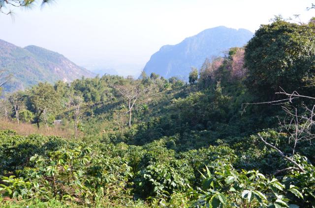 山岳地域 低木、若木-国境